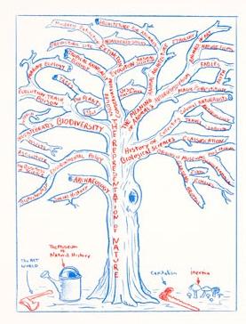 Mark Dion - Tree Scheme
